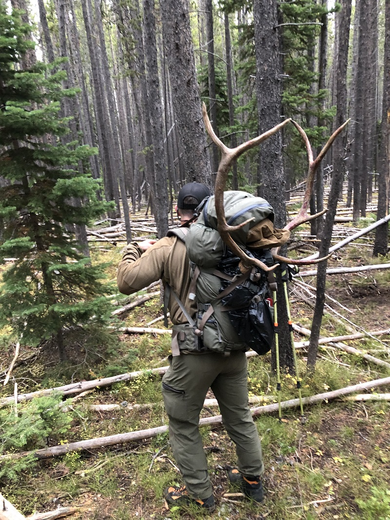 Packing out elk